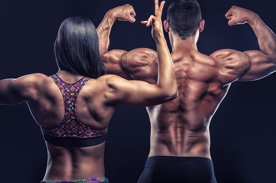 muscles et formes